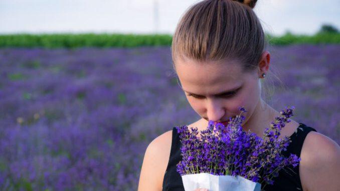 Beberapa Manfaat Dari Bunga Lavender Bagi Kecantikan!
